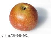 Boskop, Apfel, Apfelsorte, Apfel, Kernobst, Obst, Стоковое фото, фотограф Zoonar.com/Manfred Ruckszio / age Fotostock / Фотобанк Лори