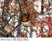 Holzstuhl in einem Baum. Стоковое фото, фотограф Zoonar.com/Karl Heinz Spremberg / easy Fotostock / Фотобанк Лори