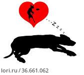 Hund träumt - Dog dreams. Стоковое фото, фотограф Zoonar.com/lantapix / easy Fotostock / Фотобанк Лори