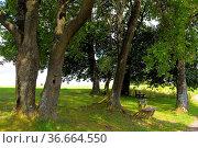 Nordschwarzwald, Baumgruppe mit Holzbank, bei Rotensol, Bank unter... Стоковое фото, фотограф Zoonar.com/Bildagentur Geduldig / easy Fotostock / Фотобанк Лори