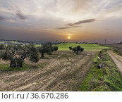Field with grass, olive trees, road and sunrisse. Pinto. Madrid. ... Стоковое фото, фотограф María del Valle Martín Morales / age Fotostock / Фотобанк Лори