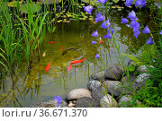 Gartenteich mit Goldfische. Стоковое фото, фотограф Zoonar.com/Bildagentur Geduldig / easy Fotostock / Фотобанк Лори