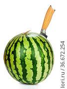 Messer steckt in Wassermelone isoliert vor weißem Hintergrund. Стоковое фото, фотограф Zoonar.com/Thomas Klee / easy Fotostock / Фотобанк Лори