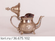 Rat in a teapot. Стоковое фото, фотограф Argument / Фотобанк Лори
