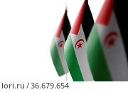 Set of Sahrawi national flags on a white background. Стоковое фото, фотограф Zoonar.com/BUTENKOV ALEKSEY / easy Fotostock / Фотобанк Лори