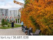 Moscow Russia - Sept 29.2021. Autumn in city park in Zelenograd. Редакционное фото, фотограф Володина Ольга / Фотобанк Лори