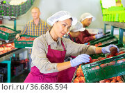 Three women and man working in sorting room. Стоковое фото, фотограф Яков Филимонов / Фотобанк Лори
