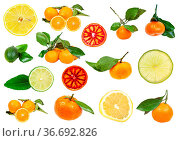 Collection of various citrus fruits isolated on white background. Стоковое фото, фотограф Zoonar.com/Valery Voennyy / easy Fotostock / Фотобанк Лори