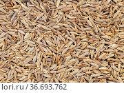Food background - many cumin (cuminum cyminum) seeds. Стоковое фото, фотограф Zoonar.com/Valery Voennyy / easy Fotostock / Фотобанк Лори
