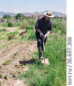 Professional horticulturist with garden shovel working at land. Стоковое фото, фотограф Яков Филимонов / Фотобанк Лори