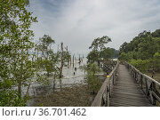 A wooden bridge crossing the mangrove tree area in the Bako National... Стоковое фото, фотограф Chua Wee Boo / age Fotostock / Фотобанк Лори