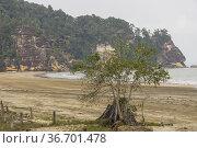 Bako National Park beach, Kuching, Sarawak, Borneo, East Malaysia.. Стоковое фото, фотограф Chua Wee Boo / age Fotostock / Фотобанк Лори