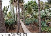 Cactus plants in botanical garden Funcahl on the portuguese island... Стоковое фото, фотограф Zoonar.com/chris willlemsen / easy Fotostock / Фотобанк Лори