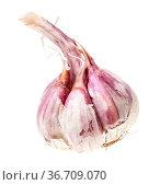 Single bulb of ripe garlic isolated on white background. Стоковое фото, фотограф Zoonar.com/Valery Voennyy / easy Fotostock / Фотобанк Лори