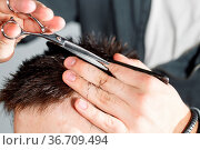 Men's haircut with scissors at salon. Barber cuts the hair of the... Стоковое фото, фотограф Zoonar.com/Konstantin Malkov / easy Fotostock / Фотобанк Лори