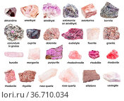 Set of various unpolished pink stones with names (purpurite, eudialyte... Стоковое фото, фотограф Zoonar.com/Valery Voennyy / easy Fotostock / Фотобанк Лори