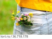 Bouquet of daisy in jean pocket. Стоковое фото, фотограф Zoonar.com/Photographer: Andrey N.Cherkasov / easy Fotostock / Фотобанк Лори