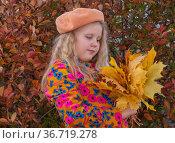Autumn. The girl holds in her hands the fallen autumn yellow beautiful maple leaves. Осень. Девочка держит в руках опавшие осенние желтые красивые листья клена. Стоковое фото, фотограф Мария / Фотобанк Лори