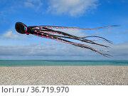DIEPPE, FRANCE - SEPTEMBER 11, 2018: Kite festival. Octopus kites in the sky in Atlantic ocean. Стоковое фото, фотограф Ирина Аринина / Фотобанк Лори