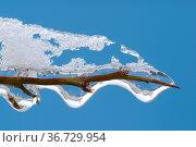 Vereister Zweig, zweig, ast, winter, frost, eis, schnee, kalt, kälte... Стоковое фото, фотограф Zoonar.com/Volker Rauch / easy Fotostock / Фотобанк Лори