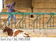 African american man farmer working with hay before feeding cows. Стоковое фото, фотограф Яков Филимонов / Фотобанк Лори