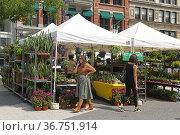 Union Square North Greenmarket. Houseplants sale. New York City. Редакционное фото, фотограф Валерия Попова / Фотобанк Лори