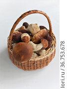 Белые грибы. Стоковое фото, фотограф Сергей Дрозд / Фотобанк Лори