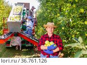 Successful elderly woman farmer showing harvest of apples in garden. Стоковое фото, фотограф Яков Филимонов / Фотобанк Лори