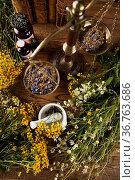 Fresh medicinal, healing herbs on wooden. Стоковое фото, фотограф Zoonar.com/Sebastian Duda / age Fotostock / Фотобанк Лори