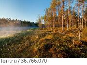 Small foggy forest lake at sunrise summer morning. Стоковое фото, фотограф Zoonar.com/Juhani Viitanen / easy Fotostock / Фотобанк Лори