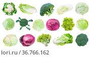Many various headed cabbages (romanesco, broccoli, cauliflower, white... Стоковое фото, фотограф Zoonar.com/Valery Voennyy / easy Fotostock / Фотобанк Лори