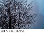 Frostiger Morgen mit der Einhard Basilika im Nebel. Стоковое фото, фотограф Zoonar.com/THOMAS RIESS / age Fotostock / Фотобанк Лори