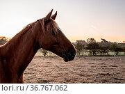 Morgens um sieben auf der Weide im Kahlgrund, Unterfranken. Стоковое фото, фотограф Zoonar.com/THOMAS RIESS / age Fotostock / Фотобанк Лори