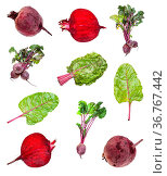 Various beet roots and greens isolated on white background. Стоковое фото, фотограф Zoonar.com/Valery Voennyy / easy Fotostock / Фотобанк Лори