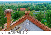 Stork nest on the roof of a red brick building, stork in the nest... Стоковое фото, фотограф Zoonar.com/NadyZima_klgd / easy Fotostock / Фотобанк Лори
