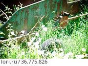 Ein verrostetes landwirtschaftliches Gerät steht auf einer Wildwiese... Стоковое фото, фотограф Zoonar.com/Bastian Kienitz / easy Fotostock / Фотобанк Лори