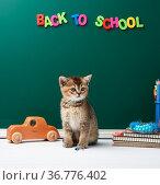 Cute kitten scottish chinchilla straight sitting, background of green... Стоковое фото, фотограф Zoonar.com/Danko Natalya / easy Fotostock / Фотобанк Лори