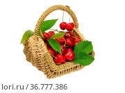 Kirschen im Korb - cherries in basket 01. Стоковое фото, фотограф Zoonar.com/Liane Matrisch / easy Fotostock / Фотобанк Лори