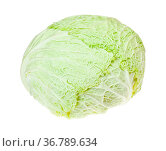 Cabbagehead of fresh savoy cabbage isolated on white background. Стоковое фото, фотограф Zoonar.com/Valery Voennyy / easy Fotostock / Фотобанк Лори
