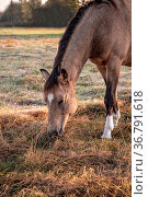 Morgens auf der Koppel. Стоковое фото, фотограф Zoonar.com/THOMAS RIESS / age Fotostock / Фотобанк Лори