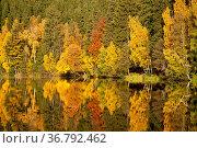 Herbstlaub und Spiegelung im Wasser. Стоковое фото, фотограф Zoonar.com/Daniel Kühne / age Fotostock / Фотобанк Лори
