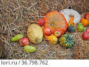 Zierkürbisse, Zierkürbiss, kürbis,kürbisse, herbst, frucht, früchte... Стоковое фото, фотограф Zoonar.com/Volker Rauch / easy Fotostock / Фотобанк Лори