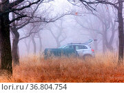 parking lot in an oak forest in late autumn on a foggy morning. Редакционное фото, фотограф Акиньшин Владимир / Фотобанк Лори