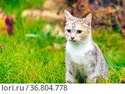 wild stray cat sitting on the grass. Стоковое фото, фотограф Акиньшин Владимир / Фотобанк Лори