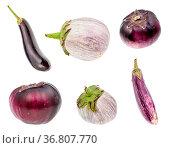 Various fresh eggplants isolated on white background. Стоковое фото, фотограф Zoonar.com/Valery Voennyy / easy Fotostock / Фотобанк Лори