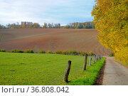Kraichgau, großer Acker, Feldweg, Стоковое фото, фотограф Zoonar.com/Bildagentur Geduldig / easy Fotostock / Фотобанк Лори