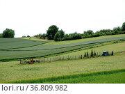 Ein Garten mit einem Werkzeugunterstand steht inmitten einer Hügellandschaft... Стоковое фото, фотограф Zoonar.com/Bastian Kienitz / easy Fotostock / Фотобанк Лори
