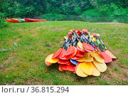The oars from the canoes on the shore, preparing for the Canoeing. Стоковое фото, фотограф Zoonar.com/seagullNady / easy Fotostock / Фотобанк Лори