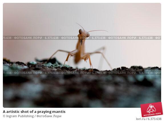 Купить «A artistic shot of a praying mantis», фото № 6373638, снято 24 марта 2019 г. (c) Ingram Publishing / Фотобанк Лори