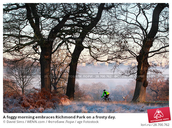 Купить «A foggy morning embraces Richmond Park on a frosty day. Featuring: Atmosphere Where: London, United Kingdom When: 29 Dec 2016 Credit: David Sims/WENN.com», фото № 28700762, снято 29 декабря 2016 г. (c) age Fotostock / Фотобанк Лори